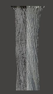 RAW 3D Scan of Tree