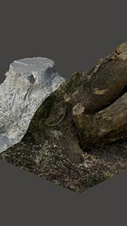 RAW 3D Scan of Stump Tree