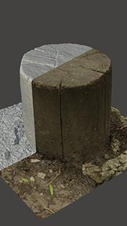 RAW 3D Scan of Stump Wood