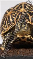 Turtle # 4