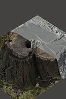 RAW 3D Scan of Stump Tree #5