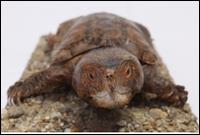 Turtle # 7