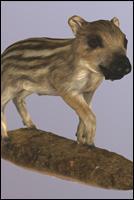 Animal - 3D Scan - Pig