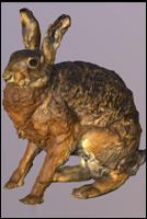 Animal - 3D Scan - Hare