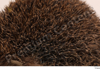 Hedgehog - Erinaceus europaeus  3 body thistle whole body 0002.jpg