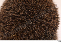 Hedgehog - Erinaceus europaeus  3 body thistle whole body 0007.jpg