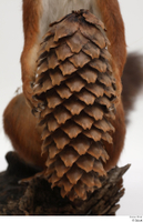Squirrel  2 hand pine cone 0001.jpg