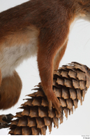 Squirrel  2 hand pine cone 0003.jpg