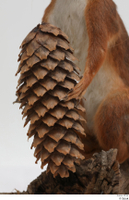 Squirrel  2 hand pine cone 0004.jpg