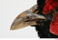 Pheasant  2 beak mouth 0002.jpg