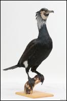 Bird # 9