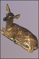 Animal 3D scan of Doe