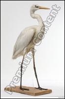 Stork # 2