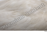 Stork  2 back feathers wing 0002.jpg