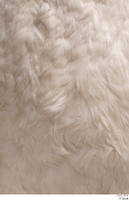 Mute swan chest feathers 0001.jpg
