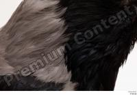 Carrion crow bird feathers neck 0001.jpg