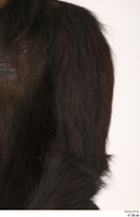 Chimpanzee Bonobo arm shoulder 0001.jpg