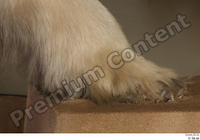 Polar bear foot 0001.jpg