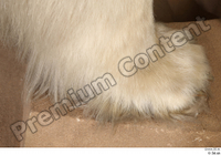 Polar bear foot 0002.jpg