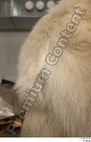 Polar bear tail 0001.jpg