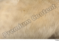 Polar bear back fur 0001.jpg
