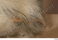 Polar bear claws foot 0001.jpg