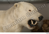 Polar bear head 0002.jpg
