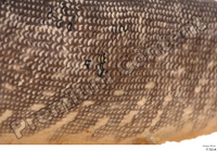 Northern pike belly body scales 0001.jpg