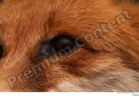 Red fox eye 0004.jpg