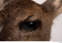 Deer doe eye 0003.jpg