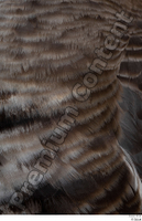 Greater white-fronted goose Anser albifrons feathers neck 0001.jpg