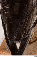 Greater white-fronted goose Anser albifrons back wing 0001.jpg