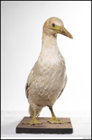 Bird # 10