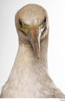 Bird 10 head neck 0001.jpg