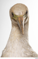 Bird 10 head neck 0002.jpg
