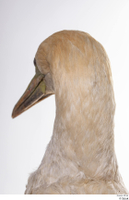 Bird 10 head neck 0004.jpg