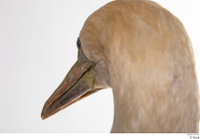 Bird 10 beak head 0006.jpg