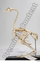 Chicken skeleton chicken skeleton 0001.jpg