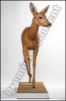 Deer Doe 2