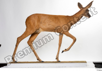 Deer Doe 2 whole body 0001.jpg