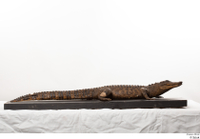 Crocodile  2 whole body 0001.jpg