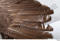 Western capercaillie back feathers wings 0001.jpg