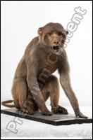 Monkey # 2