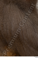 Monkey  2 arm fur 0001.jpg