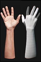 Retopologized 3D Hand scan of African male
