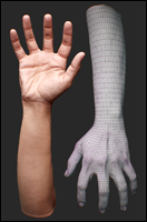 Retopologized 3D Hand scan of Fernandes Indian female