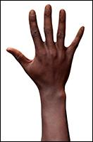 Retopologized 3D Hand scan of Fimbar