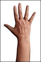Retopologized 3D Hand scan of Dana