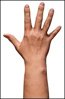 Retopologized 3D Hand scan of Abigail Morris European female
