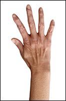 Retopologized 3D Hand scan of Isla Cole European female
